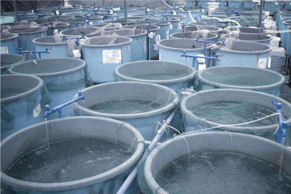Fish Tank Farming